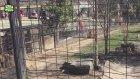 Hayvanat Bahçesindeki Hayvanların Yaptığı Haklı Saldırılar
