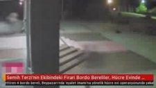 Semih Terzi'nin Ekibindeki Firari Bordo Bereliler Hücre Evinde Yakalandı