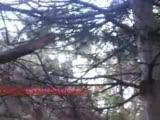 Köklüce Köyü Çamlık Videosu