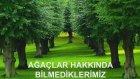 Ağaçlar Hakkında Bilmediklerimiz
