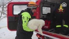 İtalya'daki Çığ Felaketinden Kurtulan Mucize Köpekler