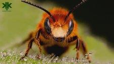 Arılar Hakkında İlginç Bilgiler