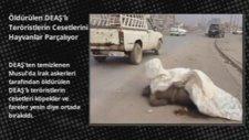 Öldürülen Deaş'lı Teröristlerin Cesetlerini Hayvanlar Parçalıyor