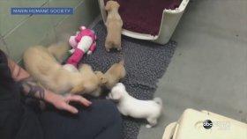 Yavrularıyla Tekrar Bir Araya Gelen Anne Köpeğin Mutluluğu