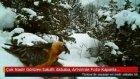 Çok Nadir Görülen Sakallı Akbaba Artvin'de Foto Kapanla Görüntülendi