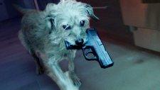 Köpek Temalı John Wick Parodisi: John Vuruldu Diye Ortalığı Toz Duman Eden Dog Wick