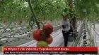 15 Milyon TL'lik Yatırımla 'Topraksız Sera' Kurdu