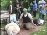 koyun kırkma makinası