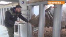 14 Şubat'ta Hayvanlar Unutulmadı