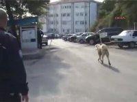 Ereğli'de Köpek Saldırısı - İsmet Yapma