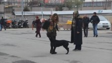 Israrla Kendisini Sevdirmek İsteyen Maskot Köpek