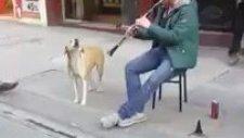 Sokak Müzisyenine Eşlik Eden Sevimli Sokak Köpeği