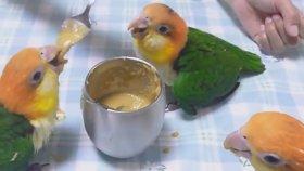 Aşırı Sevinçli Kuşlar