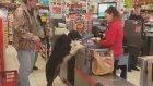 Market Alışverişi Yapan Köpek