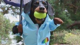 Şemsiyesiyle Yağmurun Keyfini Çıkaran Köpek