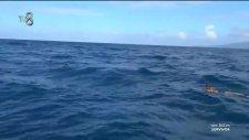Şahika Yüzerken Balinayla Karşılaştı | Survivor 2017