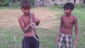 Çıplak Elleriyle Yılan Yakalayan Yürekli Çocuklar
