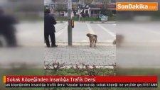 Sokak Köpeğinden İnsanlığa Trafik Dersi