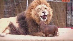 Korkusuz Hayvanlar