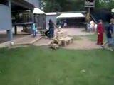 Keçi ve Kapumbağalar