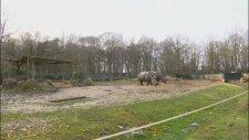 Hayvanat Bahçesindeki Gergedanı Boynuzu İçin Katletmek - Fransa