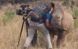 Vahşi Gergedana Masaj Yapan Fotoğrafçı