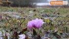 Abant'ta, Çiçek Açan Kardelen ve Çiğdemler Ilk Baharın Müjdesini Verdi
