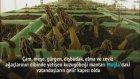 Muğla'da Yetişen Kuzugöbeği Mantarı Vatandaşların Gelir Kapısı Oldu