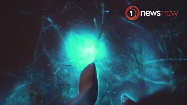 Deniz Ateş Böceğinin Okyanusu Maviye Boyaması Izlesenecom