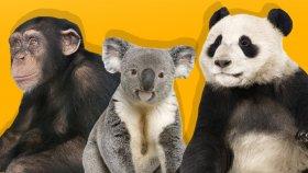 Orman Hayvanlarını Ve Yavrularını Öğreniyoruz |çocuklar İçin Gerçek Hayvanlar