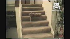 Merdivenden Düşen Kedi