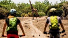 Bisiklet İle Safari Yapmak