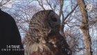 Baykuş Boynunu Nasıl 270 Derece Çevirebilir?