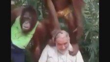 Dayının Takımları Kontrol Eden Maymunlar