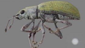 10 Milyon Değerli Böcek Koleksiyonu