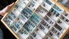60 Yılda 10 Milyon Dolarlık İnanılmaz Böcek Koleksiyonu!