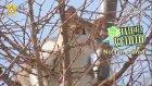 Ağaçtaki Kediyi İlginç Planla Kurtaran Çinli Polisler