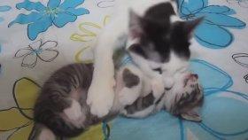 Anne Kedi Uyuyan Yavrusunu Rahatlatıyor
