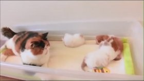 Anne Kedinin Yavrularıyla Konuşması