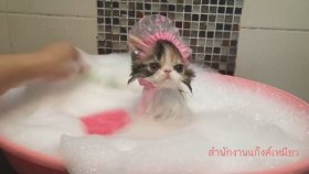 Banyo Yapan Yavru Kedi