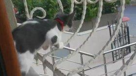 Sahibini Görünce Cama Tırmanan Kedi