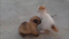 Sevimli Kedi ile Köpek Yavrusunun Arkadaşlığı