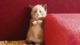 Süpürgeden Korkan Sevimli Kedi Yavrusu