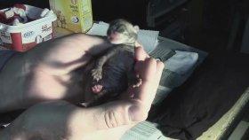 Yavru Kedi Beslemek