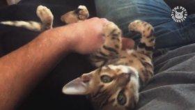 En Sevimli Yavru Kediler
