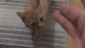 Ölü Taklidi Yapan Tatlı Yavru Kedi