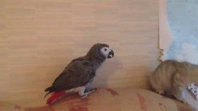 Yavru Kedi ve Papağanın ilk Karşılaşması
