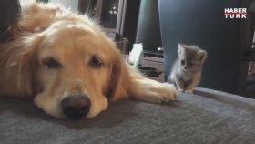 Yavru Kedinin İlk Kez Köpekle Tanışması