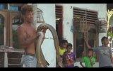 Kral Kobra Yılanı İle Çelik Çomak Gibi Oynayan Adam