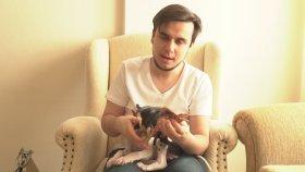 Yeni Köpeğim !